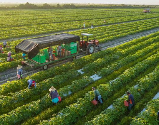 grass ad farm